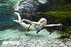 Underwater Grace - Photo by Pat Bonish, Bonish Photo