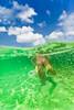 Bikini Dreams - Snorkeling in Domincan Republic -  Underwater Photography by Pat Bonish