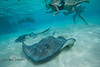 Lots of Stingrays off the Back of the Boat - Caymen Islands - Photo by Pat Bonish