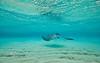 Stingray City - Caymen Islands - Photo by Pat BOnish