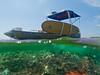 Split Shot of the Aluminum Boat - Underwater Photography by Pat Bonish