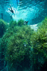 Snorkeling in Blue Springs Florida - Photo by Pat Bonish