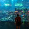 Kelsey looks at the aquarium.