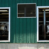 Kayla Rice/Reformer<br /> Cows look out barn windows at the Vern-Mont Farm in Vernon.
