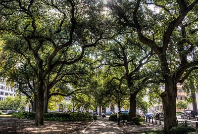 oak-trees-1