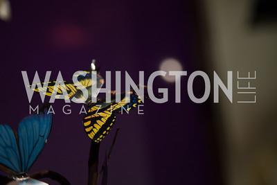 Jay Snap | LaDexon Photographie
