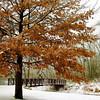Winter-South End Park