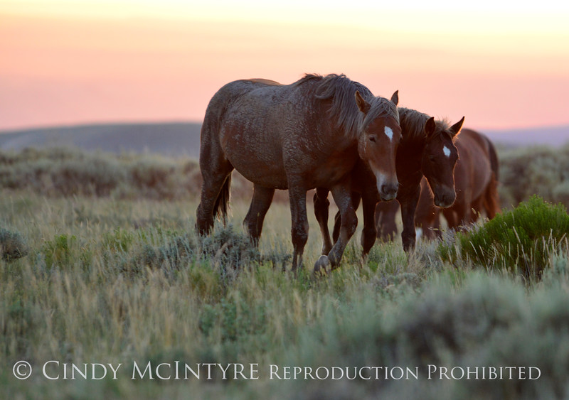 Pilot Butte horses, Green River WY (19)