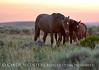 Pilot Butte horses, Green River WY (19)