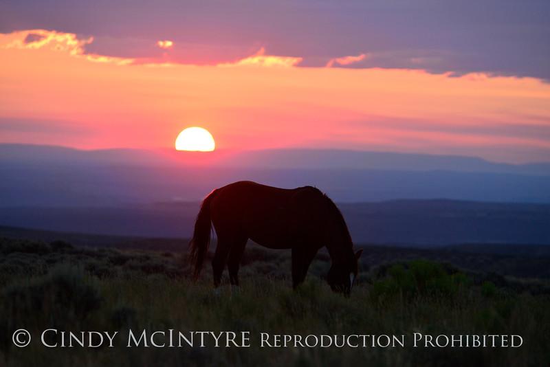 Pilot Butte horses, Green River WY (44)