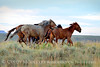 Pilot Butte horses, Green River WY (24)