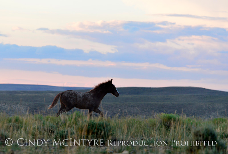 Pilot Butte horses, Green River WY (28)