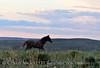 Pilot Butte horses, Green River WY (28)