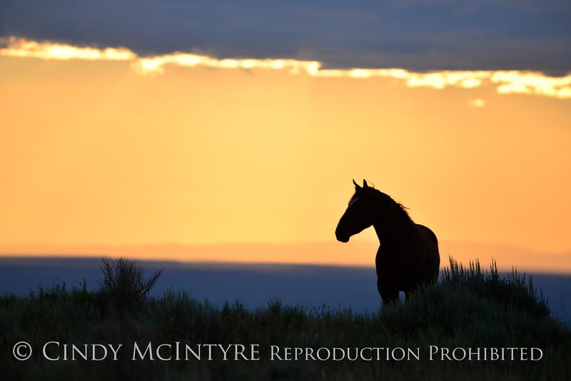 Pilot Butte horses, Green River WY (9)