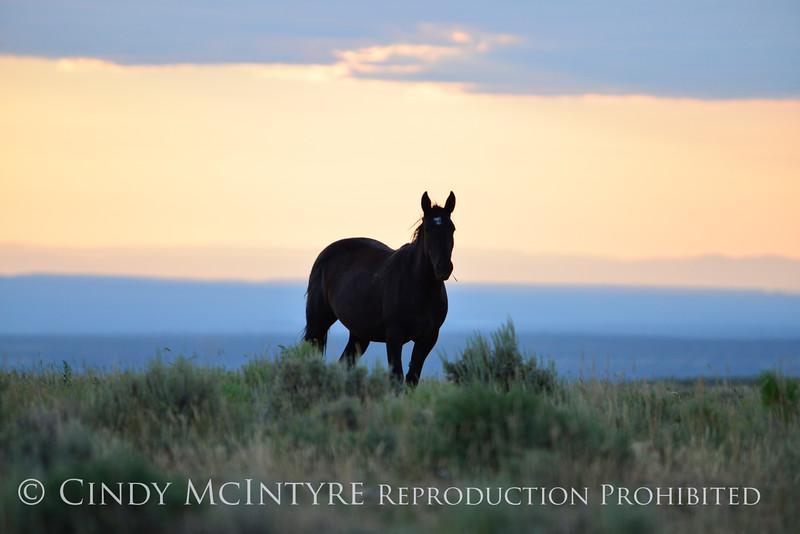 Pilot Butte horses, Green River WY (4)