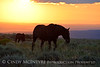 Pilot Butte horses, Green River WY (21)