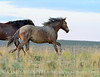 Pilot Butte horses, Green River WY (25)