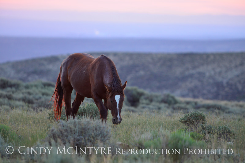 Pilot Butte horses, Green River WY (40)