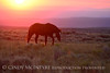 Pilot Butte horses, Green River WY (39)