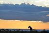 Pilot Butte horses, Green River WY (10)