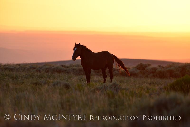 Pilot Butte horses, Green River WY (22)