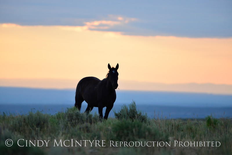 Pilot Butte horses, Green River WY (6)