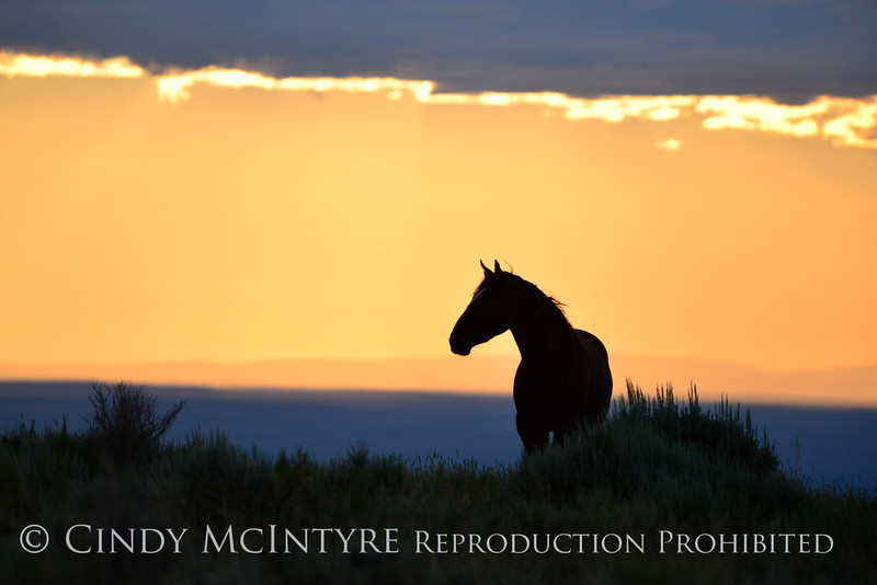 Pilot Butte horses, Green River WY (7)