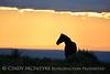 Pilot Butte horses, Green River WY (7)