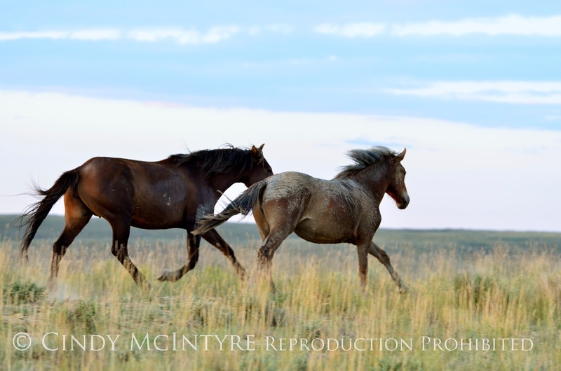 Pilot Butte horses, Green River WY (26)