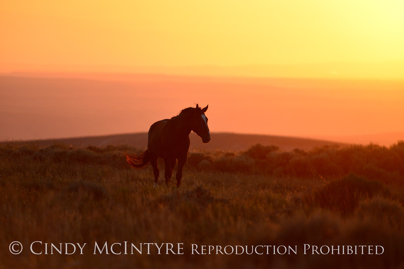 Pilot Butte horses, Green River WY (32)