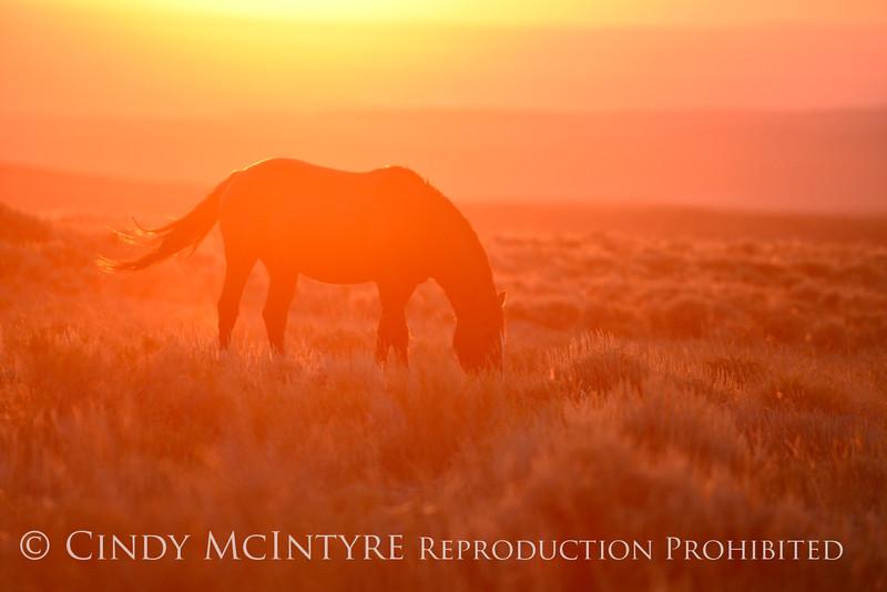 Pilot Butte horses, Green River WY (37)