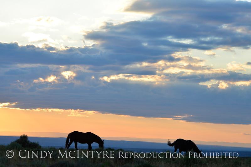 Pilot Butte horses, Green River WY (11)