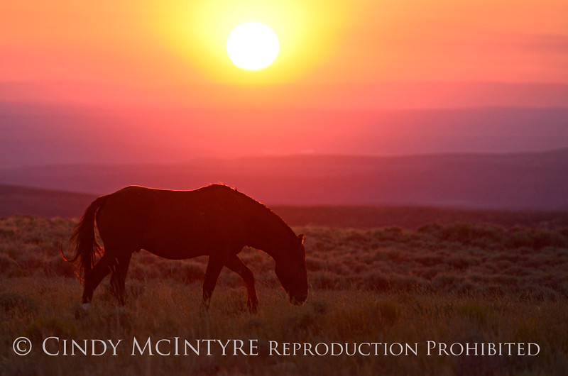 Pilot Butte horses, Green River WY (38)