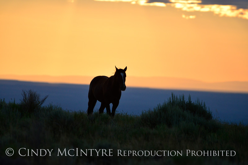 Pilot Butte horses, Green River WY (2)