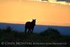 Pilot Butte horses, Green River WY (2)
