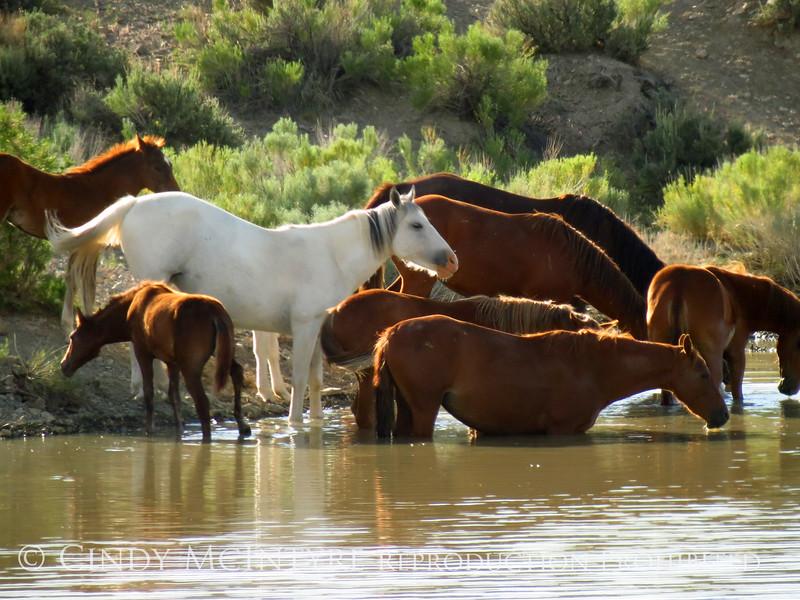 Cherokee's band at water hole