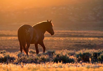 Wild Horses of the Southwest