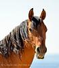 Hurricane, band stallion, Sand Wash Basin CO (5)
