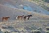 Cherokee's band, Sheepherder Springs (2)