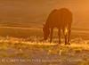 Stallion at sunrise, Sand Wash Basin CO (10)