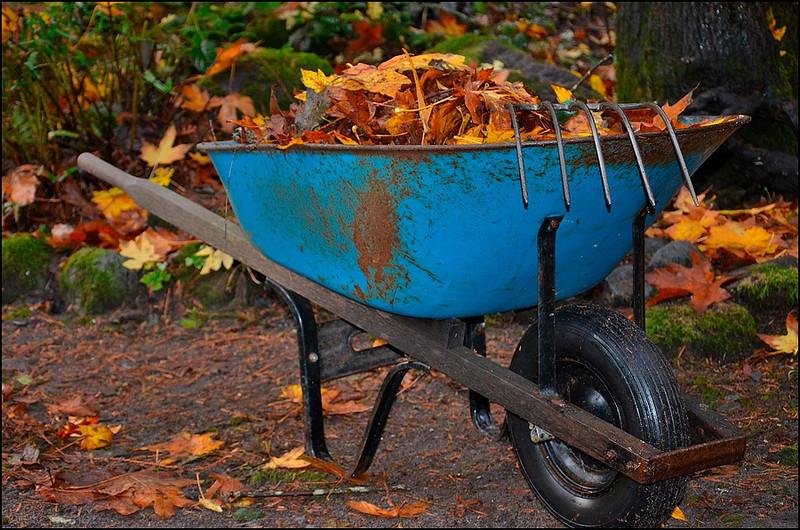 Autumn Leaf Clean-up!