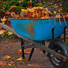 Autumn Leaf Clean-up!