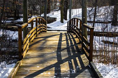 1/23/2014 Frozen Landscape and Bird Photos