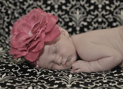newborn Joni's baby pics of Sarah Beth 382-L