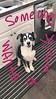 🐶Brian Friedman's cute pup!  ig story