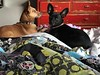 🐕  2/28 Pharaoh and Hazel  Amy Wallen amylizwrites  Surviving cold season with quilted love.