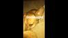 "| (• ◡•)| (❍ᴥ❍ʋ)  ""Goodnight""  Nemanjafilipovic Ig story  Pharaoh & his buddy on Nemanjafilipovic ig story,  Slow, Enhanced video"