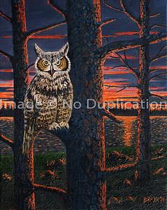 2011 WB owl