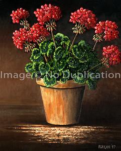 1997 WB geraniums