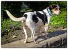 p1140243KathyLeistner_102114_Snapseed